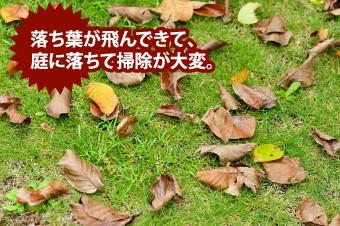 落ち葉が庭に落ちてきて掃除が大変