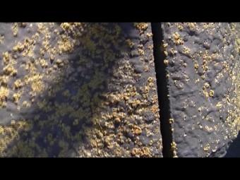 屋根の瓦に苔がびっしり