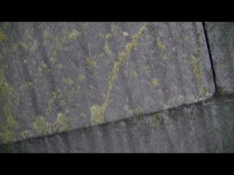 屋根表面苔