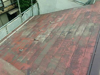 屋根表面に苔