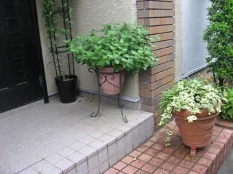 植木はどうする 塗装