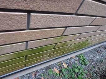 外壁表面苔はえとる