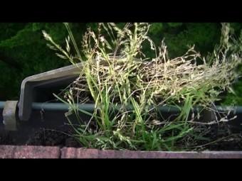樋の吸水部分に草生えてる