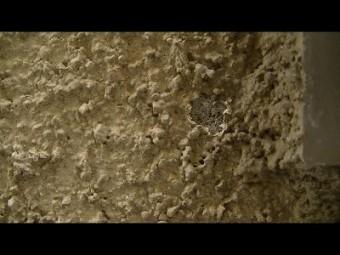 家の壁汚い