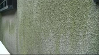 外壁に苔いっぱい