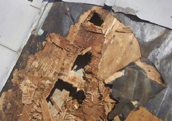 腐食により解体に耐えられなかった野地板